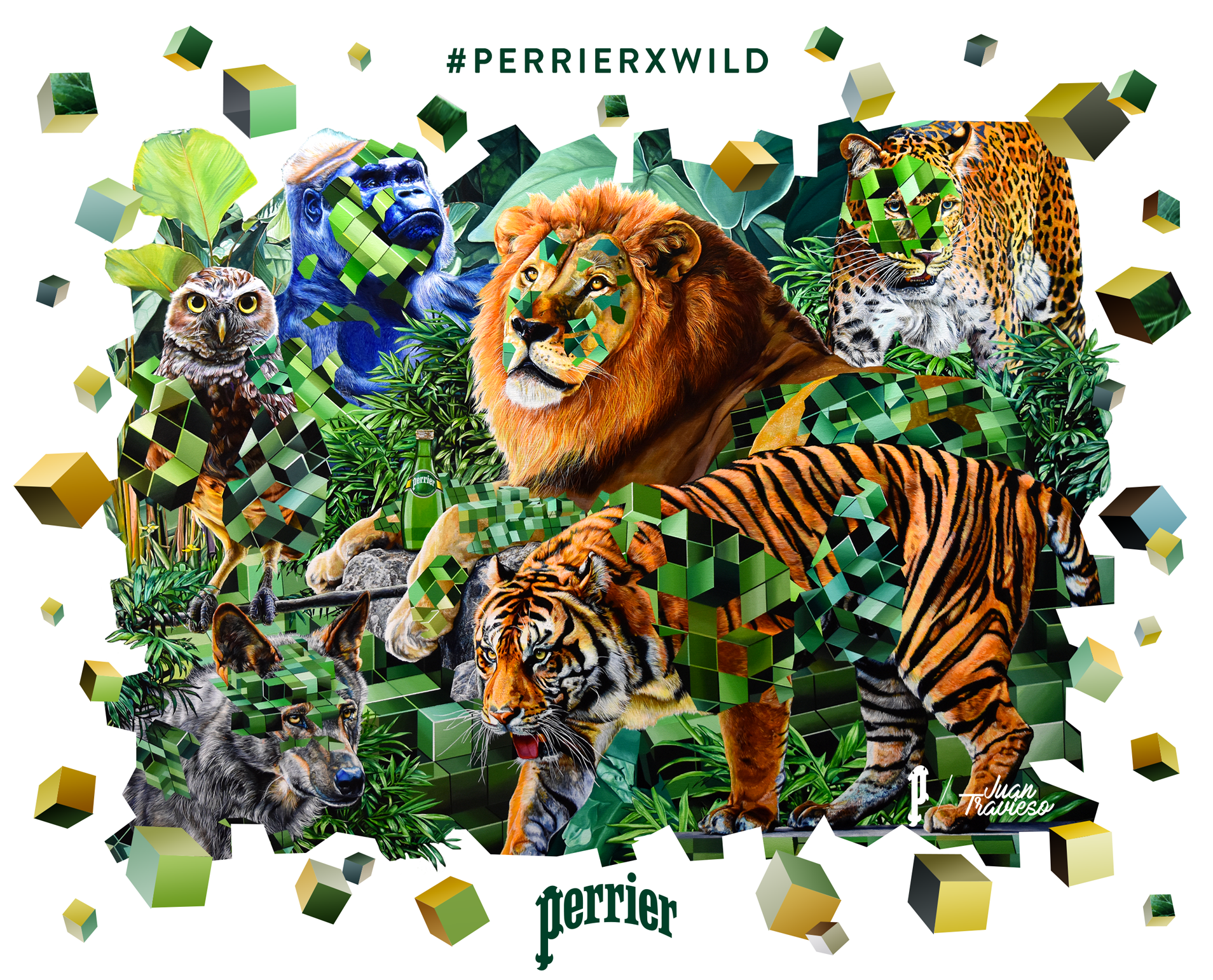 Key_Visual PerrierxWild